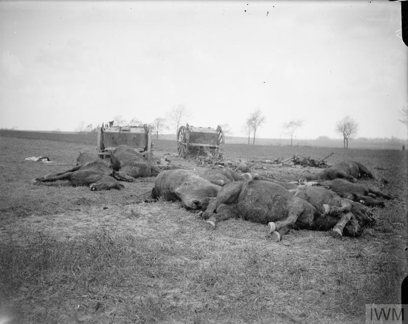 IWM Q 7853 Horses of a British ammunition limber killed by a German shell, 7 April 1918