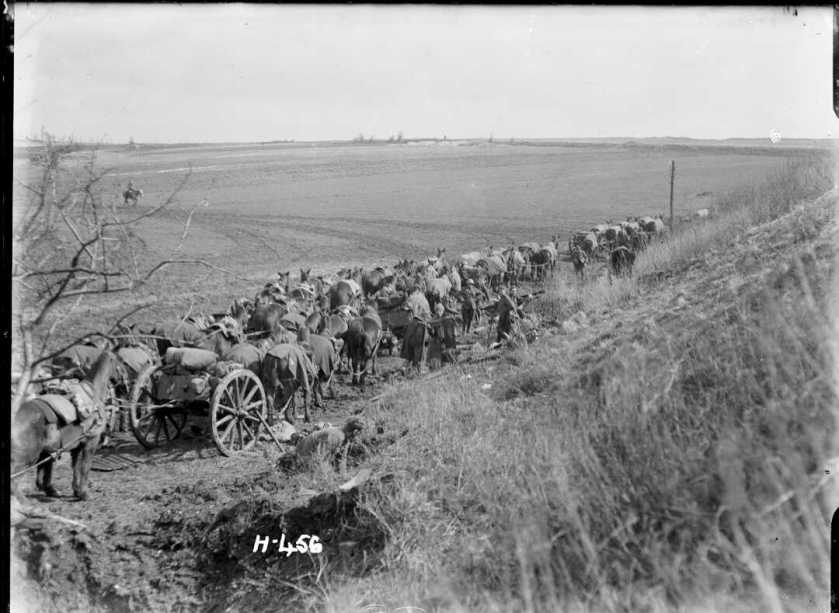 nlnzimage 12 013076-G Artillery Horses sheltering 1 April 1918