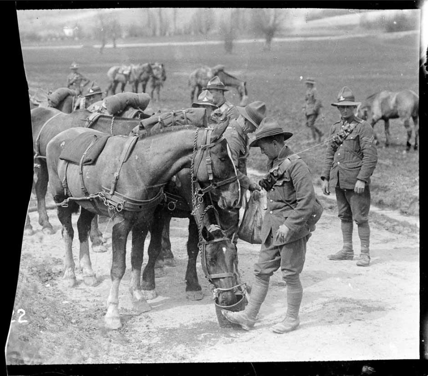 nlnzimage 1-4 009455-G Feeding horses in France, 15 May 1918